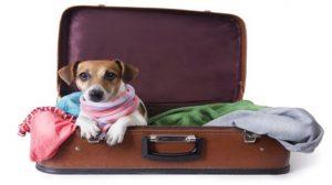 Viajes Viramundo Viajar con mascotas .. 300x168 - Viajar con Mascotas