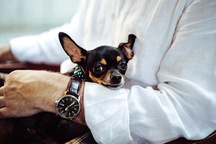 Viajes Viramundo Viajar con mascotas . - Viajar con Mascotas